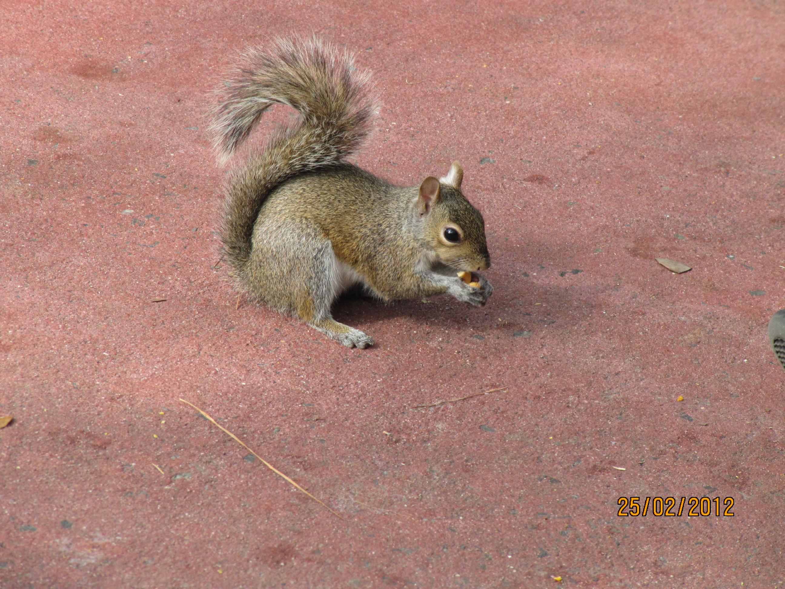O esquilo acompanhante