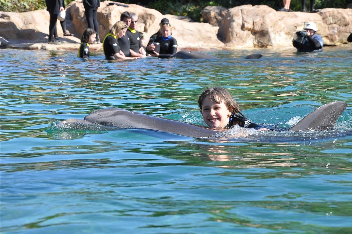 Nadando com o golfinho