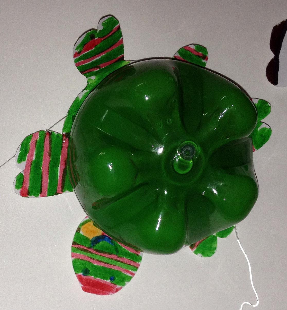 A tartaruga multicolorida da Amanda.